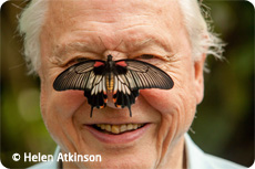 Attenborough celebrates 60 Years in the Wild