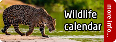 Wildlife Encounters calendar