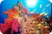Red sea coral and fish - Chicurel/Arnaud/hemis.fr