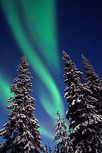 Northern lights and pine trees in Finland