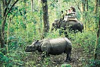 Asian Rhino and clients on elephant back, Chitwan