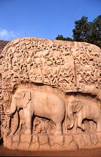 Carved relief of elephants, Mahabalipuram