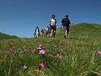 Summer flowers and walkers in the Garfagnana