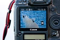 Camera screen with polar bears displayed