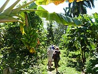 Group walking in Baracoa, Cuba