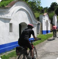 Cycling at the wine cellars in Petrov