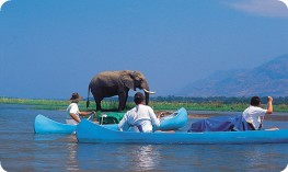 Canoe safari in Zambezi
