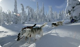 Dogsled in deep fresh snow