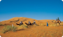 Clients on camels among sand dunes, Sahara desert