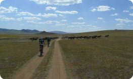 Cyclists and wild horses