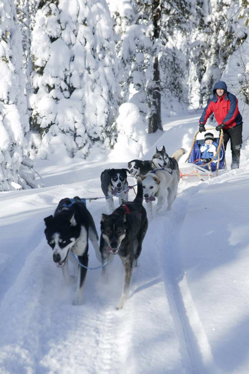 Dogsled team with driver and child at Basecamp Oulanka