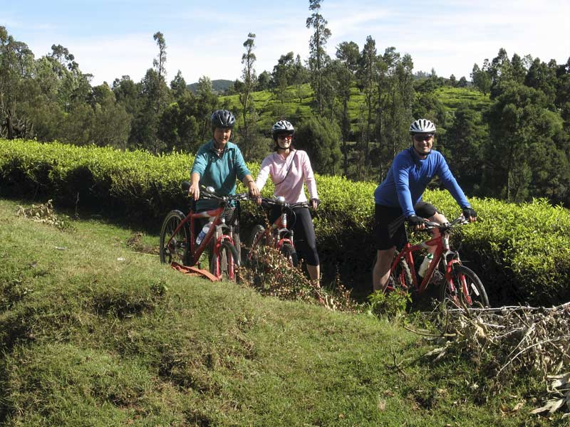 Clients in tea estate near Ooty