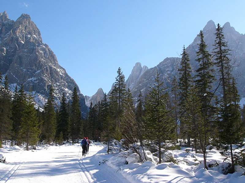 Cross-country skiers amid forest and mountains, Dobbiaco, Dolomites