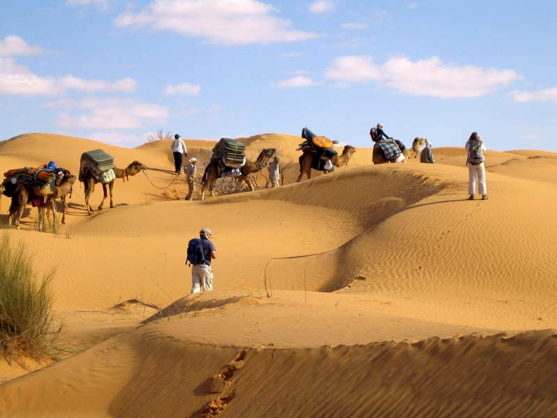 Group and camels walking in the desert