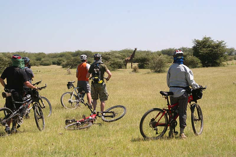 Cyclists and giraffe, Lake Manyara