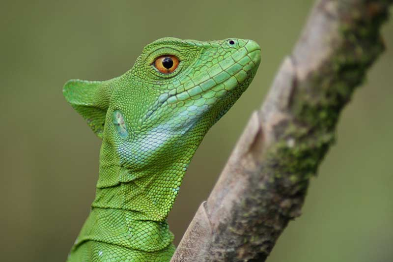 Green lizard in a tree