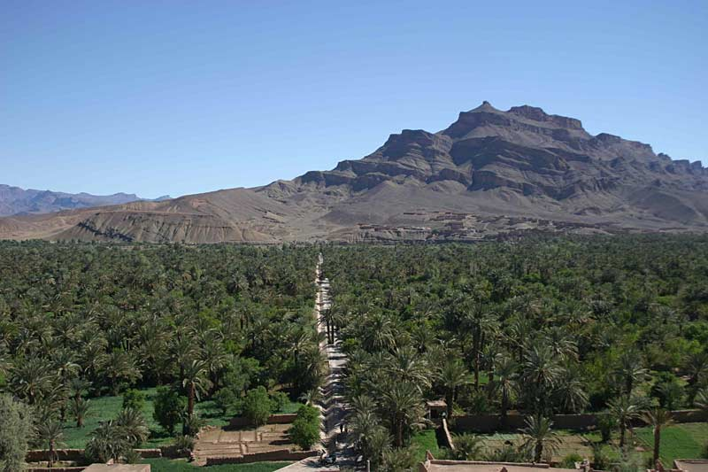 Date palms and the Jebel Sahro mountains